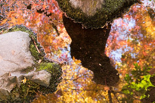 紅葉を映す水面