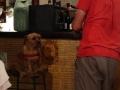 タパスの店の犬