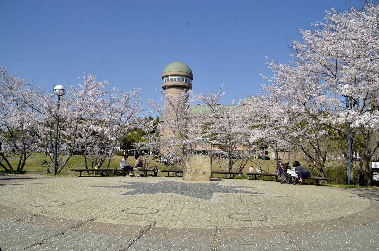 _D709915近所の桜
