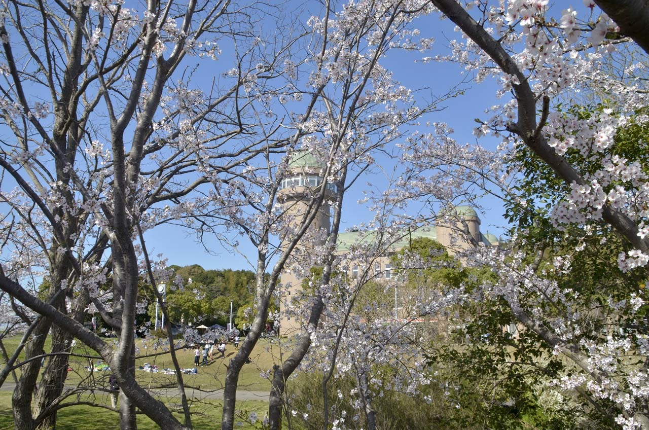 _D709904近所の桜