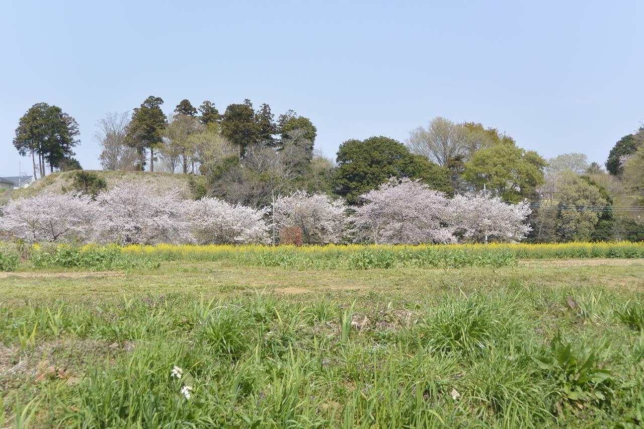 _DSC9835近所の桜