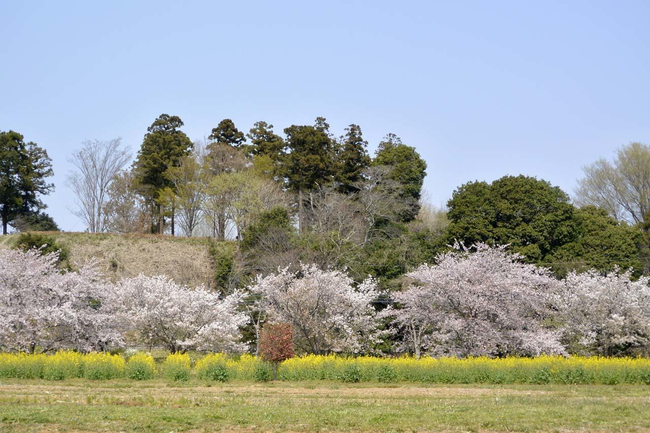 _DSC9841近所の桜