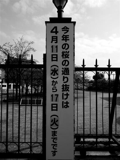 kotoshinoDSC_0618.jpg