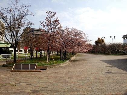 kotoshinoDSC_0620.jpg