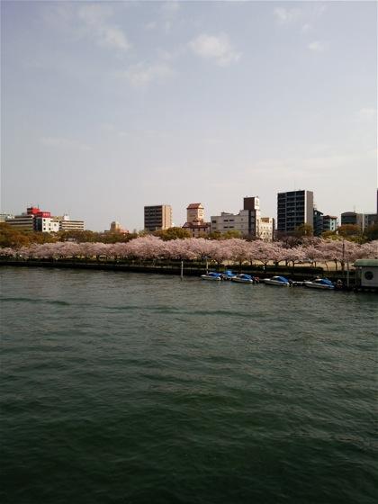 kotoshinoDSC_0628.jpg