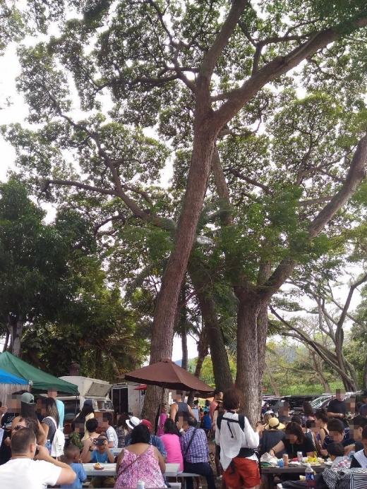HaleiwaGiovanni_004_org.jpg