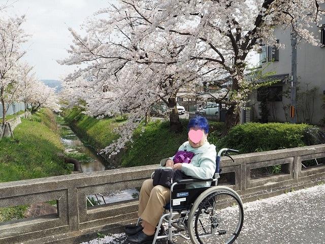 ばぁばと桜