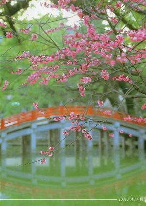 境内中に梅が咲きこぼれる