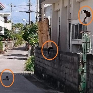 宜野座のネコさん