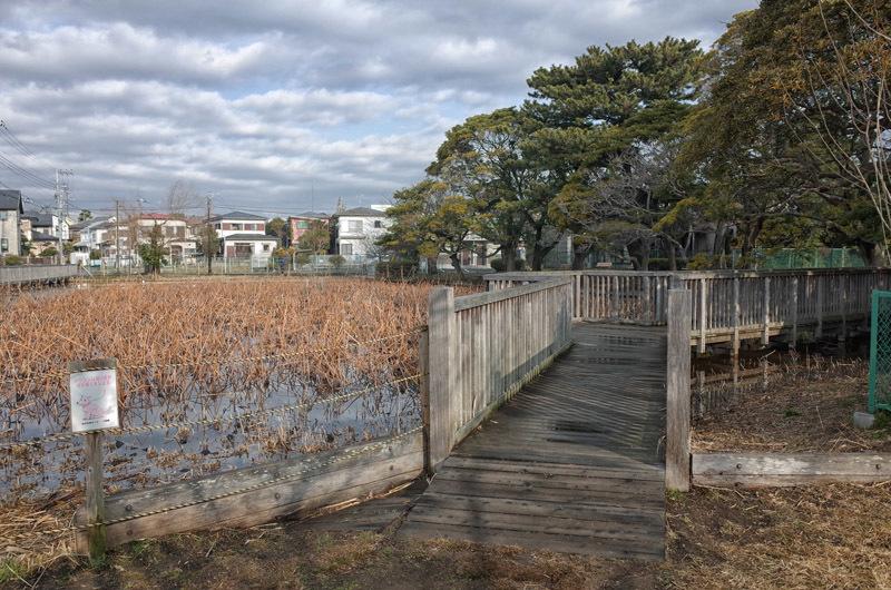 fujisawaH02 (1)