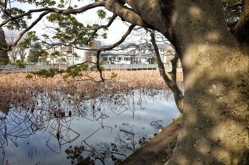 fujisawaH02 (3)
