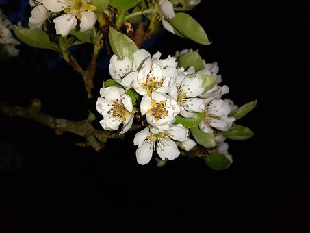 6cherry-blossom-1348588__340.jpg