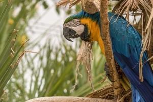 bird-3167441__340.jpg