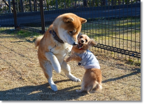 猛犬注意?!