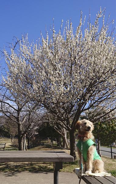 梅と桜なら僕は。。。