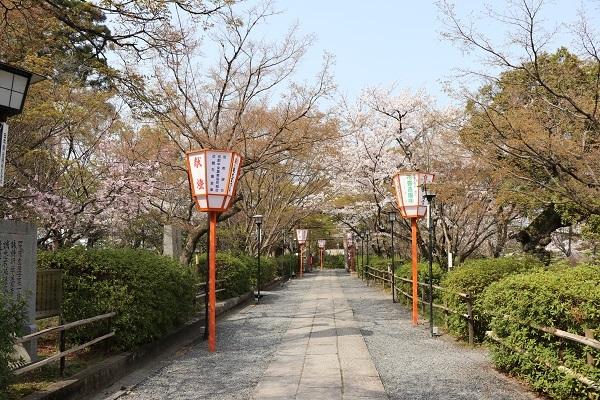 2018.04.03 満開の桜(長岡天満宮)②-3