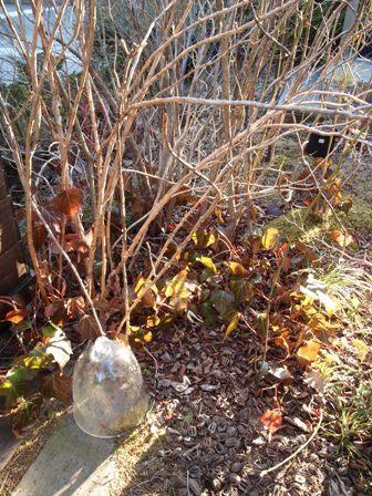 my-garden 161