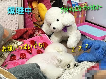 IMG_8586c.jpg