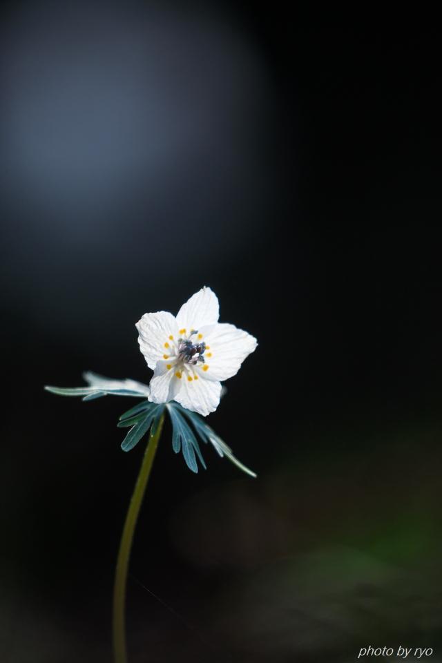 春の妖精たち_1