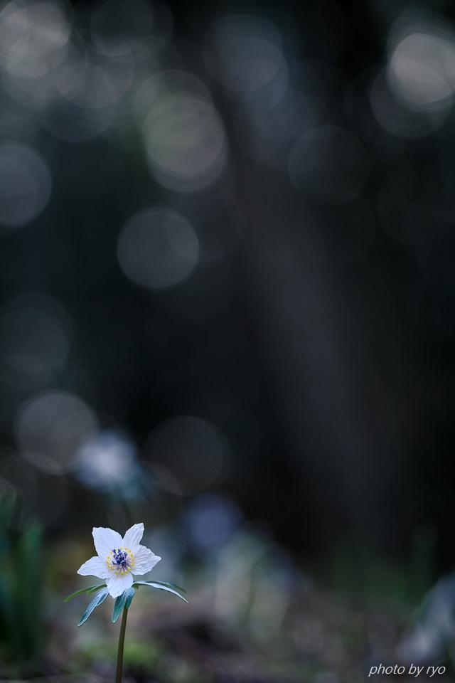 春の妖精たち_2c