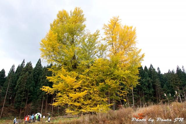 kyoboku1711-093.jpg