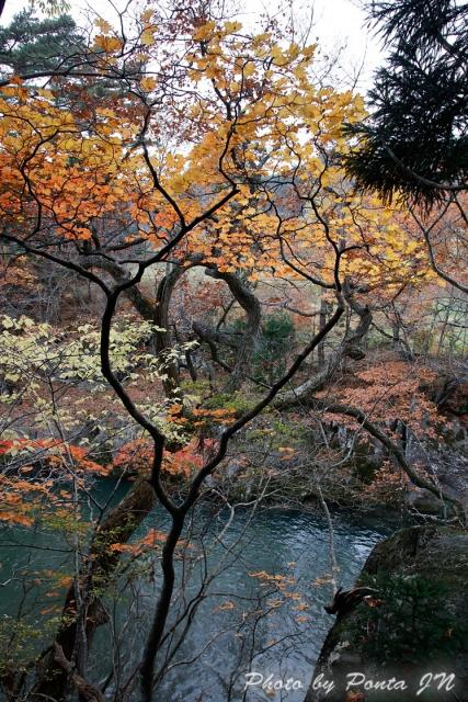 kyoboku1711-130.jpg