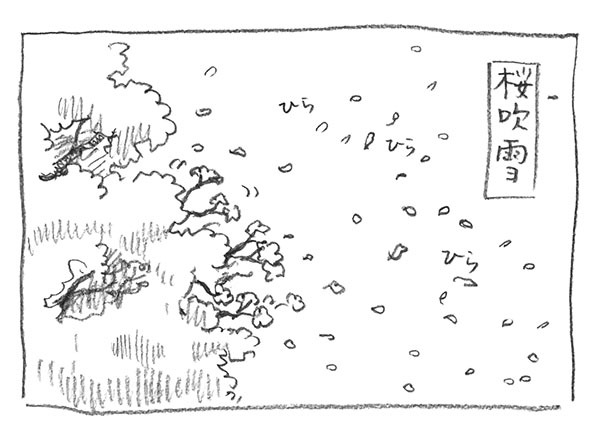 4-桜吹雪