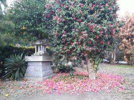 【写真】庭に咲いた椿の花が散った庭の様子