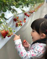 【写真】りのんちゃんがいちごを見つけたところ