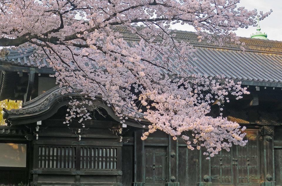 旧因州池田家江戸屋敷の表門、通称黒門の写真