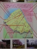 滑川市さくらマップ
