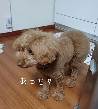 Fotor_152050587099167.jpg