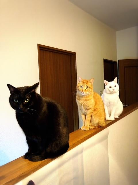 弟猫たち。毛づくろい順番待ち⁉😊