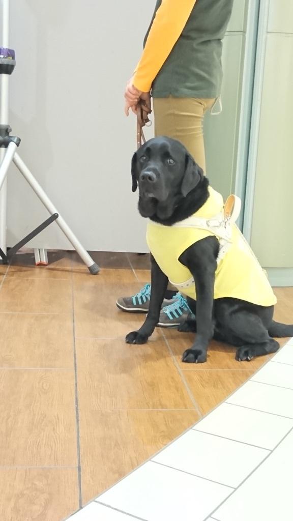 出番を待つ盲導犬✨✨