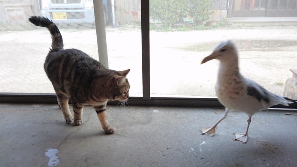 おっとりした、ろんくんにジョナサンは『私のこと襲わないの?』と驚いているようです(^_^)