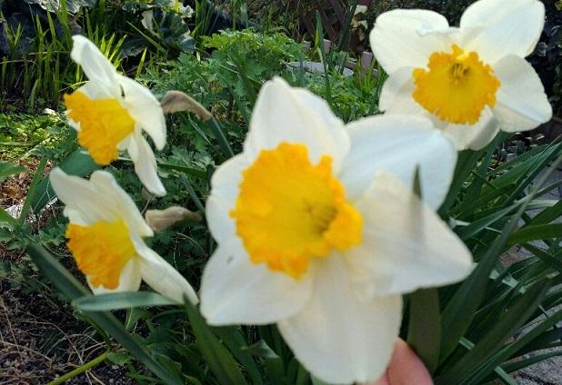 春の花17