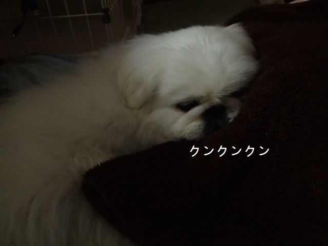 P32100111.jpg