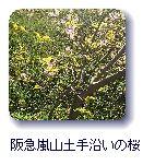 阪急嵐山土手沿いの桜