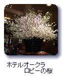 ホテルオークラロビーの桜
