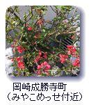 岡崎成勝寺町(みやこめっせ付近)