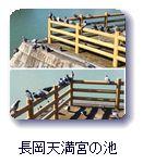 長岡天満宮の池