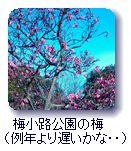 梅小路公園の梅(例年より遅いかな・・)