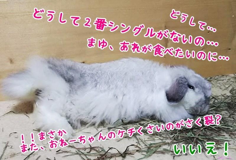 s-DSC_8527.jpg