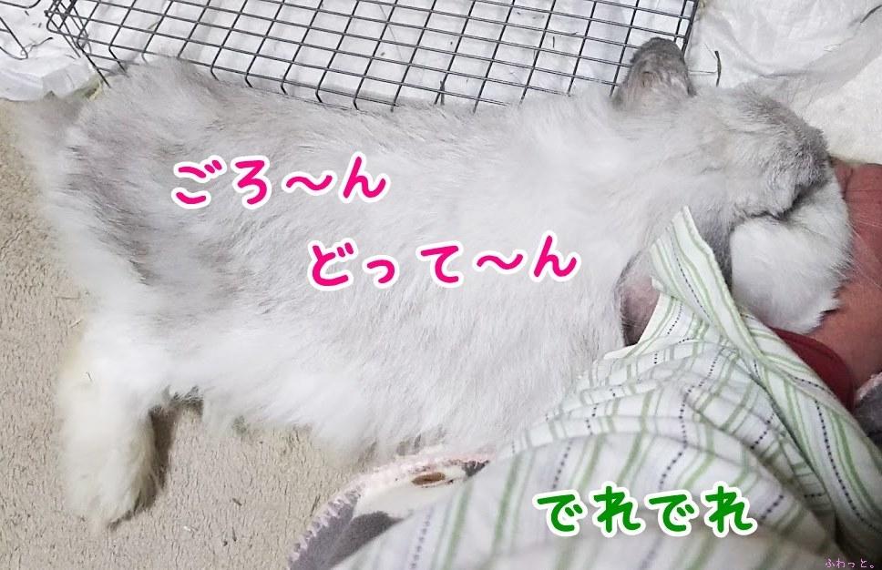 s-DSC_8655.jpg