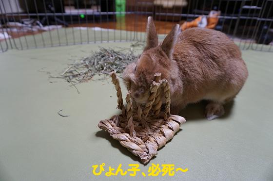 ぴょん子180301_00