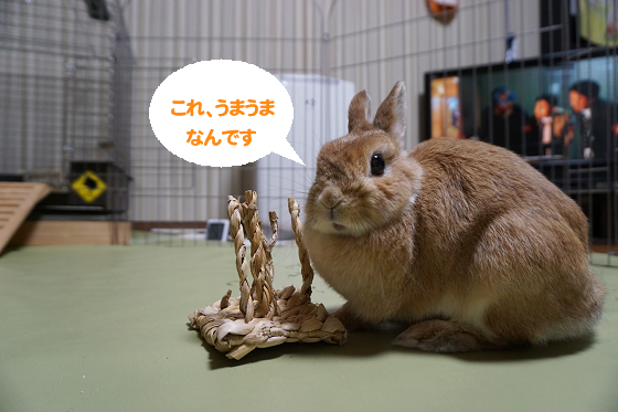 ぴょん子180301_01