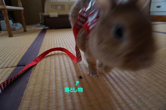 ぴょん子180402_04