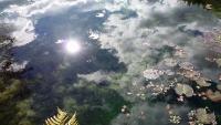 20171202_121700 モネの池
