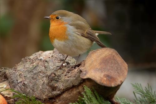 bird-675128_960_720.jpg