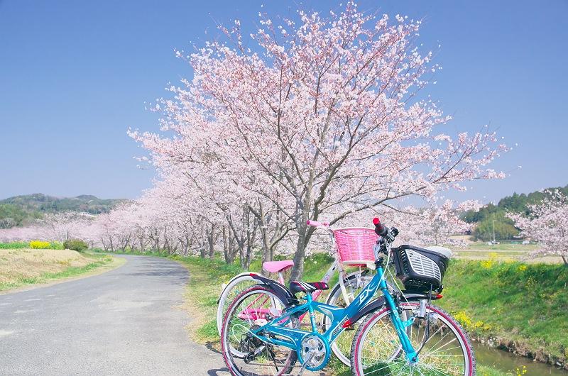 春色自転車